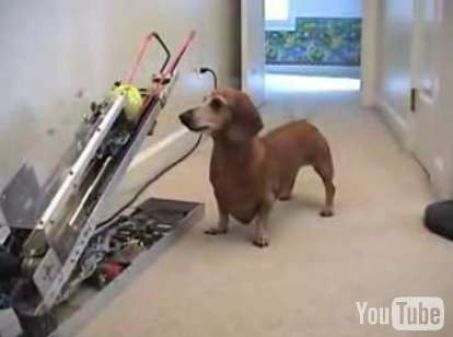 auto tennis ball thrower for dachshunds