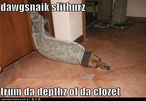 photographs prev next 10 funny dog pictures dogsnake slithering jpg